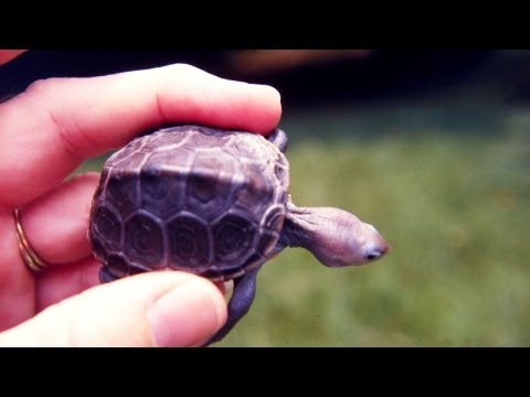 How to Take Care of a Baby Turtle | Pet Turtles