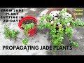 How To Grow Jade Plants // Grow jade plant, Crassula, Money  ,Friendship, lucky plant from cutting.
