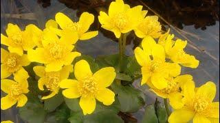 Весенние цветы - природа оживает / Маленький народец