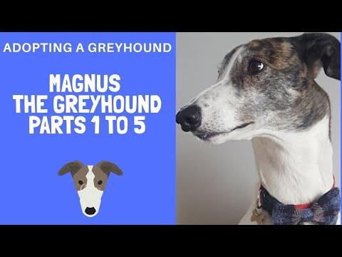 Adopting A Greyhound - Magnus Episodes 1-5