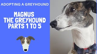 Adopting A Greyhound - Magnus Episodes 1-5