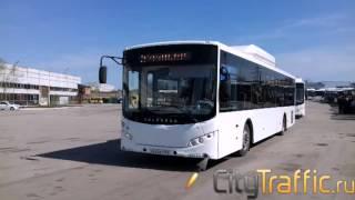 новые автобусы выходят на дороги Тольятти