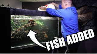 FISH ADDED TO DIY AQUARIUM! 7 Oscar fish!!!