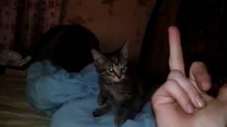 просто кот не любит когда ему показывают фак