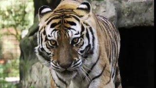 Teisha Tiger