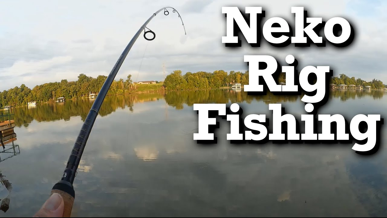 Learning from jon b fishing a neko rig for the first for Neko rig fishing