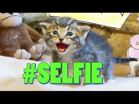#SELFIE (Official Cat Music Video) – The Chainsmokers PARODY #LOLCAT