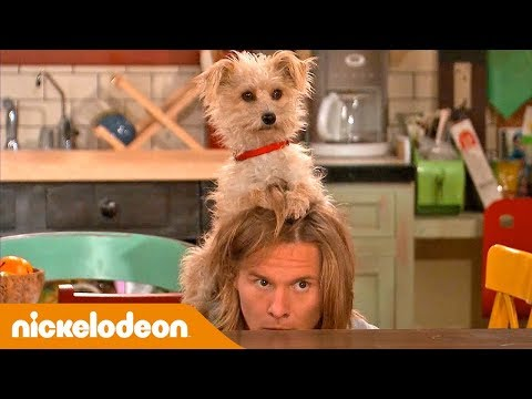 Nicky Ricky Dicky & Dawn | Come Nascondere Una Celebrità | Nickelodeon Italia