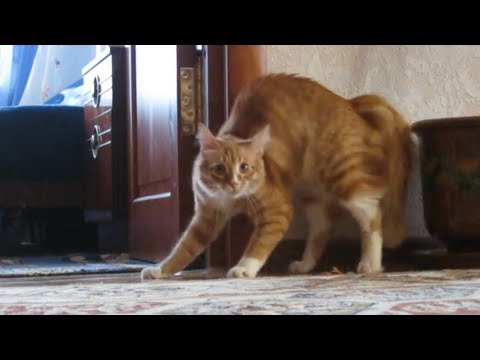 Thumbnail: Adrenaline Cats | Funny Cat Video Compilation 2017