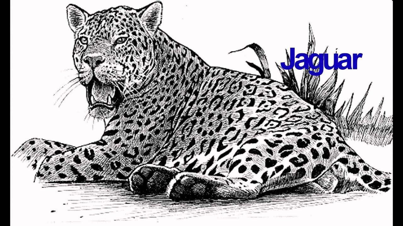 знаете, картинки кошки ягуар графика коллекция разрабатывается учетом