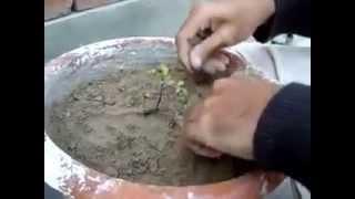 growing plant part 1 (urdu/hindi)