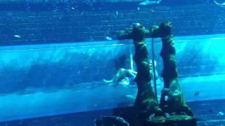 Дубай.Аквапарк Атлантис.(, 2010-12-13T12:18:52.000Z)