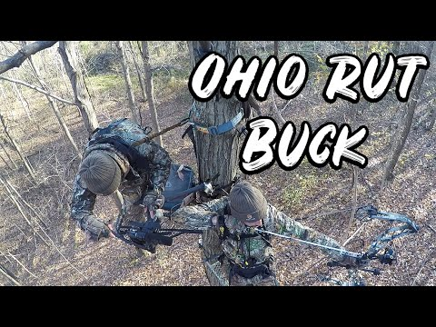 ARROW RELEASED ON OHIO BUCK! Thomas Bowhunts The Rut In Ohio | Hunting Junky