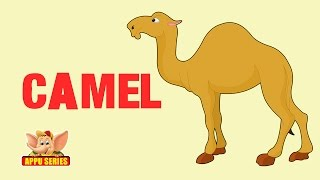 Animal Facts - Camel