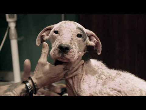 The Devastating Sight of an Emaciated Puppy