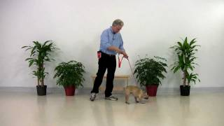 Dog Training French Bulldog - Linus 001