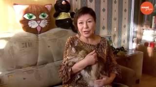 Пушистое утро: Понимают ли нас кошки?