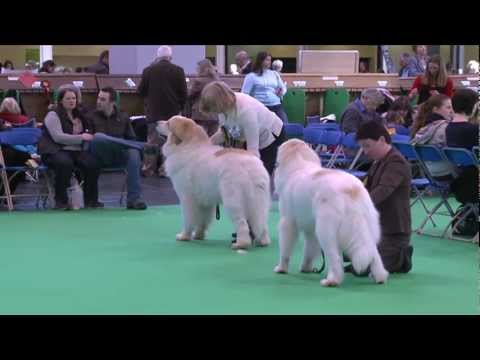 dfs Crufts 2011 - Best of Breed Pyrenean Mountain Dog