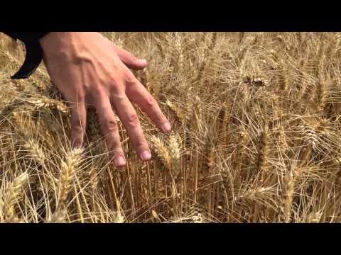 Gladiator, wheat field, private version :)