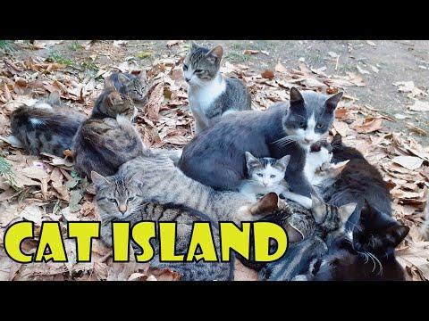 Cat Island - Incredible