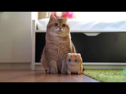 Mini Hosico Cuddle Plush