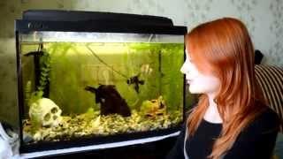 Обзор аквариума 100 литров (участник конкурса)