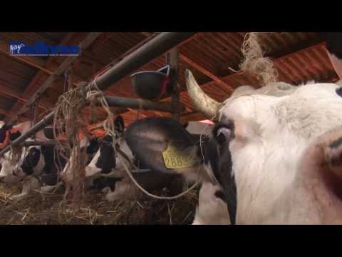 Extreme koeien bij fokker van Ponsstar Shogun