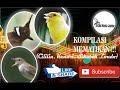 Kompilasi Mematikan Cililin Kenari Sikatan Londo Dengan Jeda Suara Jernih  Mp3 - Mp4 Download