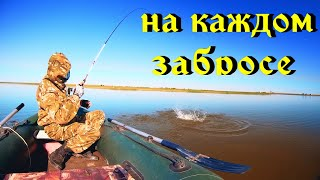 Летняя рыбалка с лодки Поклевки на каждом забросе