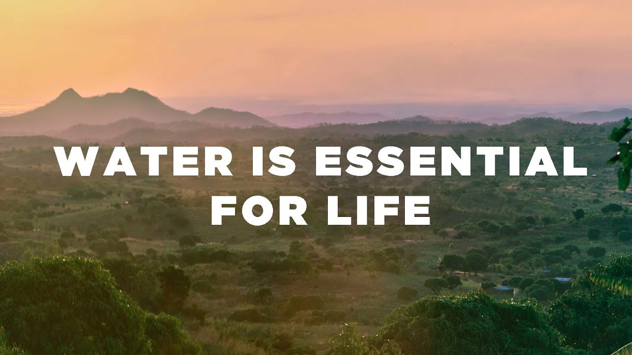 is drinking water significant regarding life
