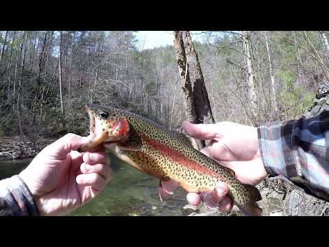 Trout Fishing In The Mountains Of East Tenn.
