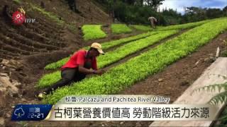 當局剷除古柯植株 秘魯農民生活苦 2015-08-24 TITV 原視新聞