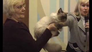 Окрас колор-пойнт - выставка кошек PCA