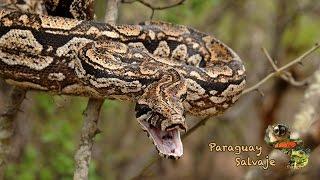 Paraguay Salvaje: Boquerón, un departamento salvaje