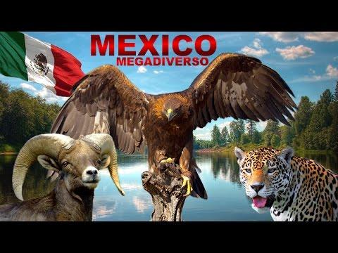 MEXICO MEGADIVERSO: La Gran Riqueza Natural de México