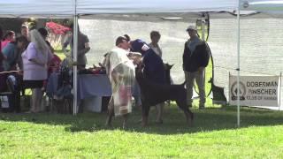 11-03-13 Doberman Pincher Club Of Hawaii 94th Specialty