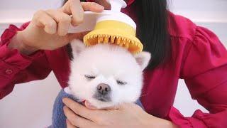 입소문난 강아지 브러쉬 언박싱  |  힐링브러쉬로 포메…