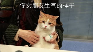 [Cat Live] It costs me 4000 RMB to make the tooth surgery for Zhupi