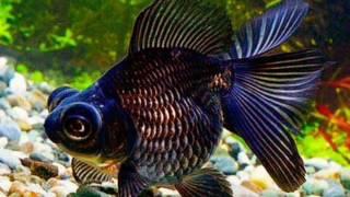 Топ 11 самые красивые аквариумные рыбки