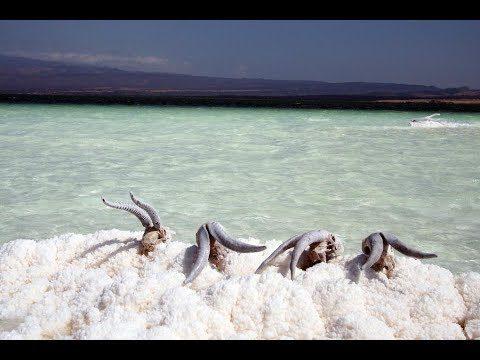 Lake Assal in Djibouti ,travel a beautiful salt lake, salt transport