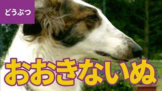 おおきな犬、大集合! 大きくて、かしこいワンちゃんたち【動物・生き物...