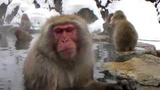 雪の地獄谷野猿公苑 Japanese Snow Monkeys (Jigokudani, Shiga Kogen, Nagano)