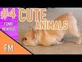 Funniest Animal Fails Compilation 2015   FailArmy