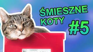 Śmieszne koty #5