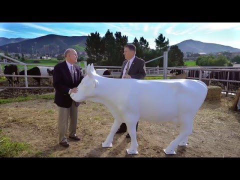 CowParade SLO County: Cuesta Cougars v Cal Poly Mustangs