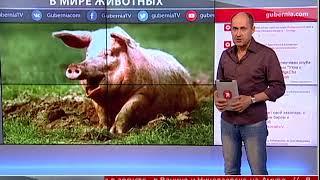 Новости интернета 21/08/2017 GuberniaTV