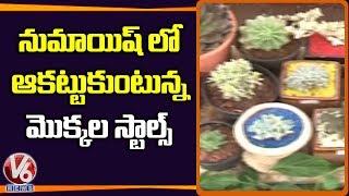 Plants Stalls Attracts City Public In Numaish Exhibition  Telugu News