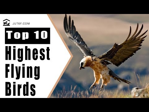 Birds Flying High - Top 10 Highest Flying Birds In The World