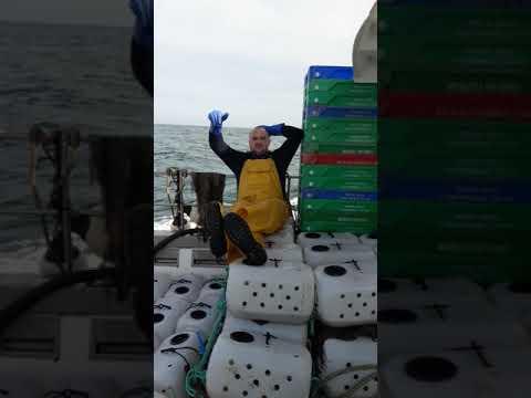 Fishing Whelks Atlantic Ocean