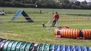 Imaia des Bordes Rouges et Plinio - Jumping - Satigny 23 05 15